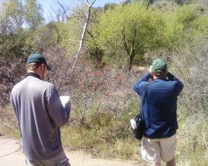 Birders in action.